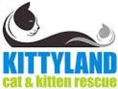 Kittyland Cat and Kitten Rescue